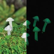 Glow Mushrooms for Fairy Gardens